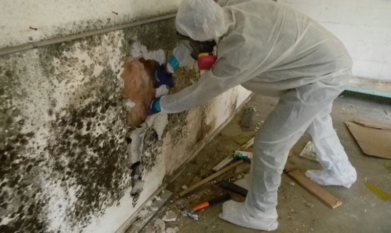 Why You Need a Mold Removal Service