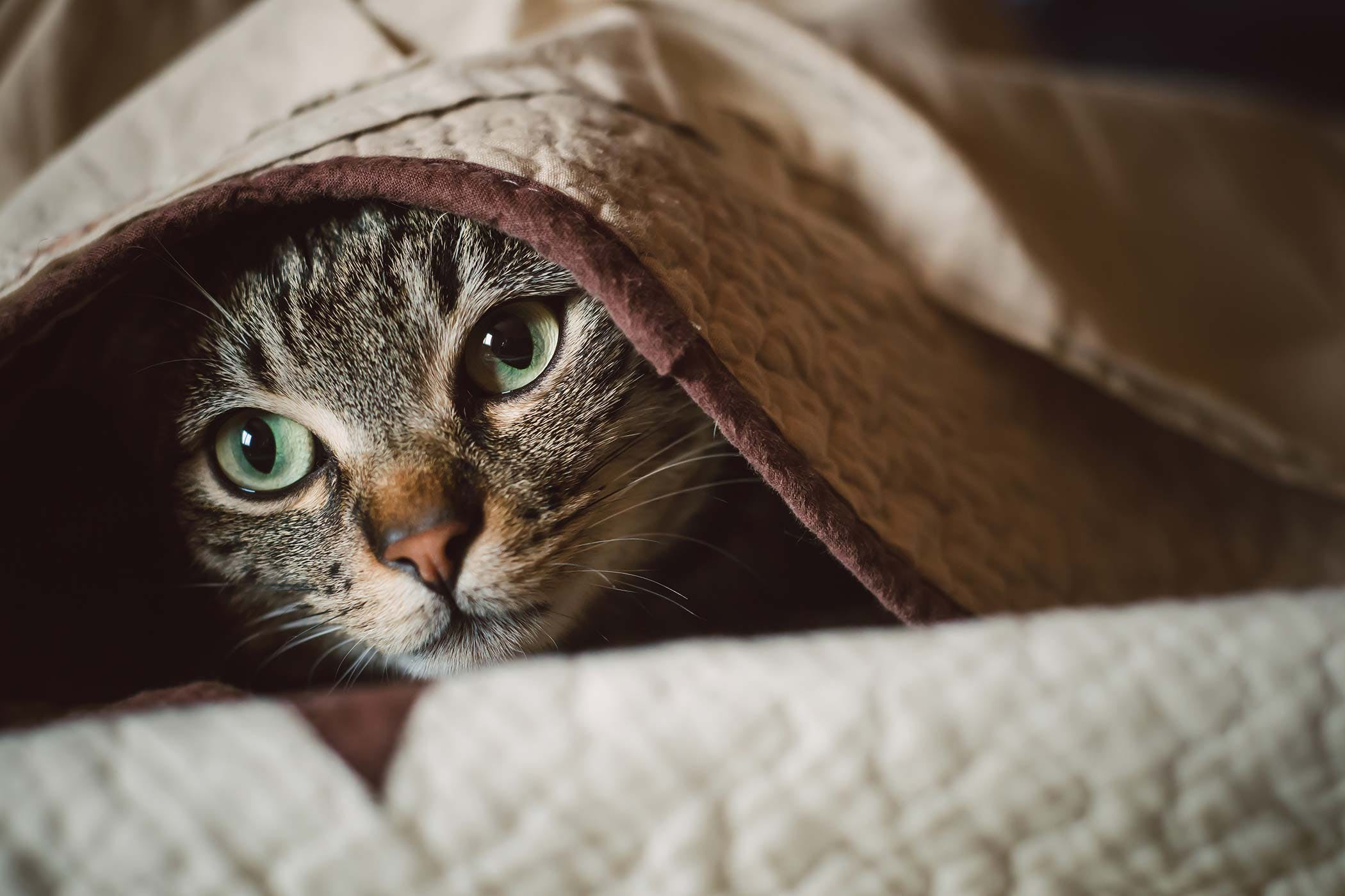 How to Help With Cats Anxiety and CBD Treatment Effects