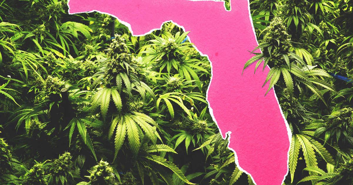 Certification For Medicinal Marijuana In Florida