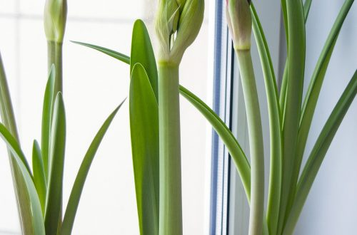 What to Consider Before Buying Plants for Your Home