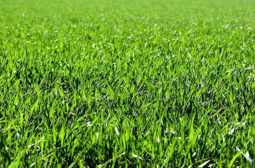 4 Helpful Tips To Take Care Of Your Lawn
